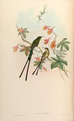 A monograph of the Trochilidæ, or family of humming-birds /. London :Printed by Taylor and Francis ;1861 [i.e. 1849-1861