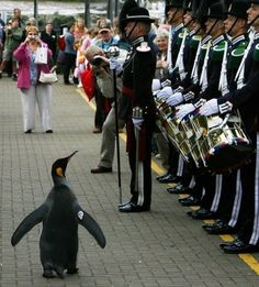 В Норвегии есть королевский пингвин, возведенный в ранг рыцаря. Его полное имя — Сэр Нильс Олав.