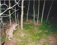 Hidden Cams Reveal What Animals Do When Nobody Is Watching
