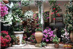 Cordoba, Spain - I saw many beautiful patios here 2 years ago. I would love to go back!
