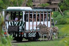 When you visit Bali, don't forget to visit @balisafari   ans enjoy riding on a safari bus to visit the animals, watching fascinating elephant talent shows, get cuddly with baby orangutans, and view baby sharks at the aquarium. Families travelling with children will have a blast together at the adjacent water and amusement parks. Via Balisafari-marineparks #holidayinn #holidayinnbalibenoa #resortbali #bali #hotelbali #travelling #travel #holiday #explorebali #balieveryday #bestvacation…