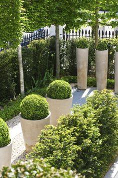 Pommier paliss recherche google amenagement fond du for Jardin urbain contemporain