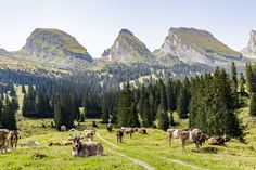 Wanderung Toggenburg Places In Switzerland, Planet Earth, Alps, Trekking, The Good Place, Road Trip, Hiking, Wanderlust, Adventure
