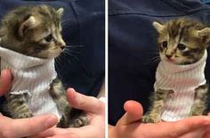 People Are Obsessed With This Rescued Kitten Who Got A Sock Sweater