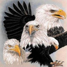 2019 New Animal Eagle Picture Wall Decor Diy Diamond Painting Kits UK The Eagles, Bald Eagles, Eagle Pictures, Bird Pictures, Birds Pics, Eagle Painting, Diy Painting, Eagle Drawing, Eagle Art