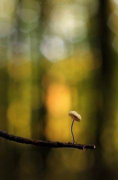 Mushroom by Marcsaa on 500px
