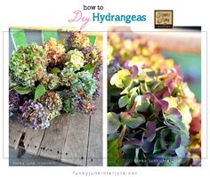 how to harvest and dry multicoloured hydrangeas Funky Junk Interiors Hydrangea Garden, Growing Hydrangea, Funky Junk Interiors, Flower Crafts, Dried Flowers, Wilted Flowers, Lawn And Garden, Floral Arrangements, Flower Arrangement