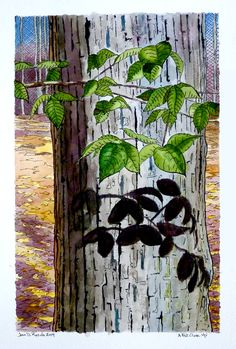 """Fall Close Up, 2014, ink & watercolor on Arches 400lb CP, 12"""" x 18"""".  Somewhat stylized - different for me."""