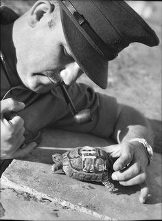 "Captain D Michelson with a turtle named ""Tim"", the mascot of the 2/2nd Battalion (Australian, WWII). Date Taken: 28 March 1940 in Palestine, Julis. ID Number: 001117, Australian War Memorial"