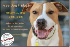 Friday Fun Day…Free Dog Day (and brand new bed)!!!!!! This is big! Share…share…share! NO adoption fee... FRIDAY: Visit Angels of Assisi, 41...