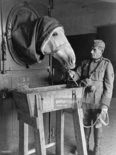 Military hospital for ill horses, horse with skin desease getting treatment with gas (1942)