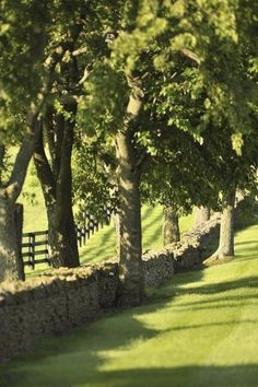 The Vinery Thoroughbred Farm, Lexington, Kentucky. Lovely stone walls and rows of trees