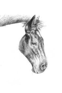 Illustratrice naturaliste & dessin animalier: Merens #4