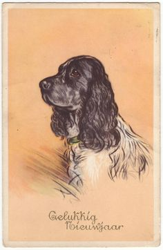 This is an antique postcard from Belgium, dated 1950's. It has a nice image of a painted cocker spaniel.