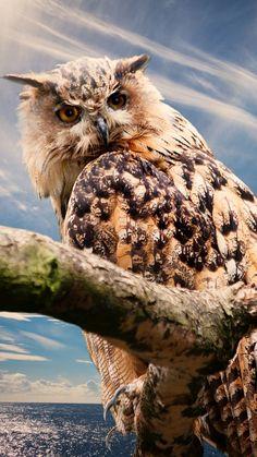 All Animals Pictures, Owl Pictures, Rare Birds, Exotic Birds, Owl Bird, Pet Birds, Nocturne, Beautiful Birds, Animals Beautiful