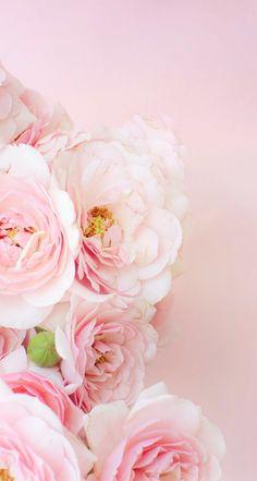 Wallpaper iPhone # beautiful flowers ⚪️