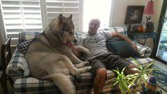 ソファに座る巨大犬