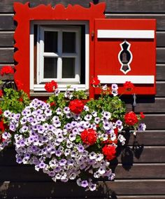 Types of Houseplant Bugs and Methods to Check Their Infestation Sankt Michael Im Lungau, Austria Teresa Restegui Garden Windows, Old Windows, Windows And Doors, Red Shutters, Window Dressings, Window View, Through The Window, Window Boxes, Flower Boxes