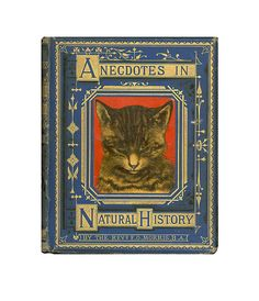 Antique Book Victorian Children's Nature Stories Illustrated Cat Rare Anecdotes in Natural History by Rev. F .O. Morris. via Etsy.