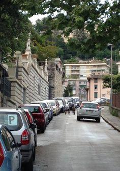 Cinghiali in mezzo alla strada, fra via Marco Polo e via Piaggio, #Genova. La foto di un lettore del Secolo XIX.