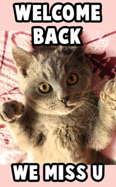 You can put free images of welcome back memes on your wa status or share them with your close friends.  #meme #animalmeme #monkeymeme #welcomeback #funnypicture #bestfunnypicture #veryfunnypicture Welcome Back Meme, Today Meme, Welcome Images, Very Funny Pictures, Close Friends, Animal Memes, Free Images, Movie Posters, Animals
