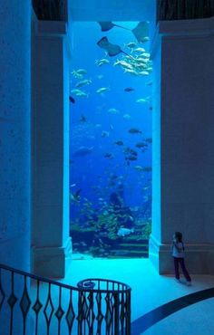 I would love to visit Atlantis hotel in Dubai, if for no other reason than to see the incredible views into the ocean.