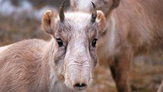 2013年02月の記事 | ANIMAL CONSERVATION BLOG