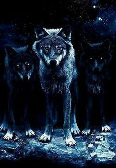 Two Wolfs black and one white