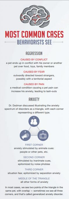 7 causes of aggression and anxiety in pets #infographic