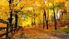 autumn free background wallpaper