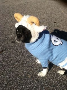 Dog Halloween Costume Contest: James Bond as Ramses The Ram