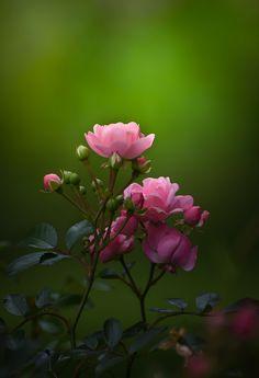 Blossom Garden - Paradise of Flowers! Beautiful Flowers Wallpapers, Beautiful Nature Wallpaper, Most Beautiful Flowers, Pretty Flowers, Pink Flowers, Flower Backgrounds, Flower Wallpaper, Art Floral, 4k Photography