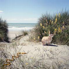 Rabbit on the beach!.. . .*Bunny AND!?..crappola..sometimes the beach ISN'T so benevolent. :(