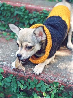 DIY crochet cowl neck dog sweater for my chihuahua pup Apples :)