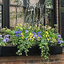 Pretty Planters (also see http://pinterest.com/hometalk/pretty-planters/) :: Barb Rosen's clipboard on Hometalk :: Hometalk