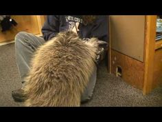 "▶ Porcupine Named ""Stinkers"" - YouTube"
