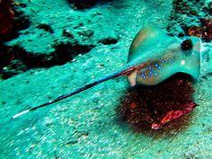 Scuba diving in Bali http://www.scubacrowd.com/diving-bali-island/2271730