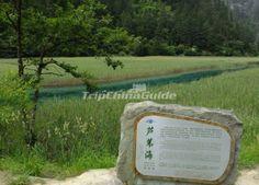 Reed Lake at Jiuzhaigou Valley Sichuan