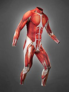 Muscle Skin Suits for Bicyclists, Looks Like Exposed Muscle Flesh  By Rusty Blazenhoff on February 13, 2013