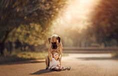 Alice with Sean, her Great Dane. | From Little Kids and Their Big Dogs