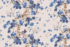 Murals of Clematis Powder Blue by Michael Angove (3000mm x 2400mm) | Shop | Surface View
