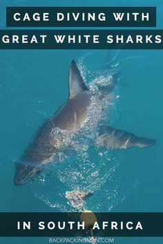 Cage Diving With Great White Sharks In Gaansbai, South Africa.