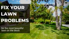 Fix your lawn problems for the most beautiful lawn on the block. Lawn Problems, Colorado Landscaping, Weed Types, Water Issues, Residential Landscaping, Whats Wrong With Me, Lawn Care Tips, Dog Urine, Soil Ph