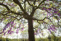 Centre d'arts et de nature « L'arbre aux fruits célestes » - Installation de Shigeko Hirakawa, 2012 - © E. Sander