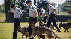 """The Canadian Press   A workshop at the RCMP's dog training centre in Alberta has attracted officers and animals from police forces across the continent eager to see the centre's pioneering work tackling the scourge of fentanyl. """"No agency in the world was conducting fentanyl... - #Alberta, #America, #Calgary, #Central, #Dog, #Fentanyldetecting, #Health, #Lures, #North, #Police, #Training"""