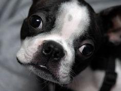 oh puppy