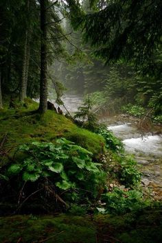 swansong-willows: (via Pin by Michelle Yankee on creekside |...