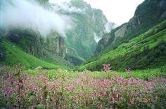 Valley of Flowers - Uttaranchal ( India )
