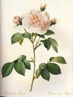 Flower   #Vintage Fine #Art Prints   #GalleryDirect