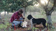 Dogs are a truffle hunter's best friend in Oregon's fertile harvesting grounds.